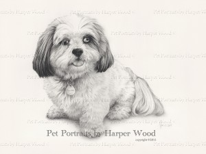 Lhasa Apso pencil drawing 1mb