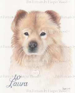 chow chow drawing 2mb