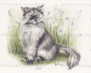 domestic longhair cat 2mb