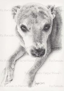 old dog soulful eyes 2mb